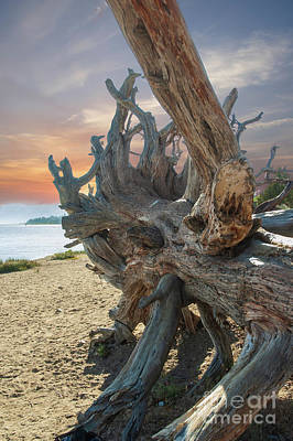 Wild Weather - The old tree by Micah May