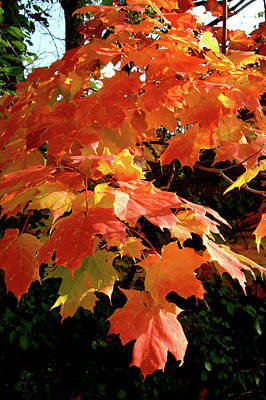 Photograph - The Orange and Gold of Autumn by Valerie Kirkwood