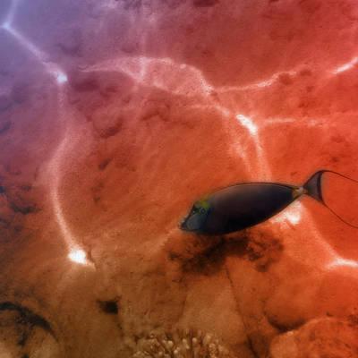 Steampunk - The Orangespine Unicornfish Closeup by Johanna Hurmerinta