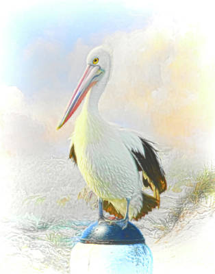 Wild Weather - The Pelican by Trudi Simmonds
