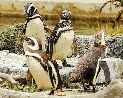 Farm Life Paintings Rob Moline - The Penguin Family by Joie Cameron-Brown