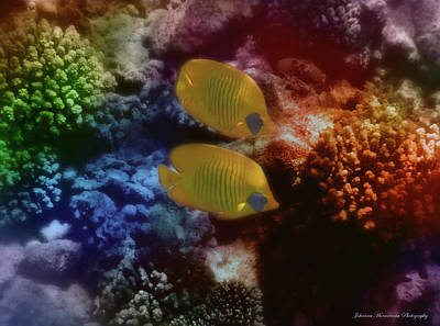 Palm Trees - The Red Sea Masked Butterflyfish Couple Colorfully by Johanna Hurmerinta