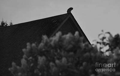 Photograph - The Silent Watcher by Rose De Dan