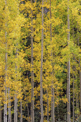 Royalty-Free and Rights-Managed Images - The Straight and Yellow by Peter Tellone