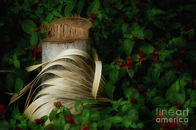 Still Life Royalty-Free and Rights-Managed Images - The Stump and the Palm Frond by Mike Nellums