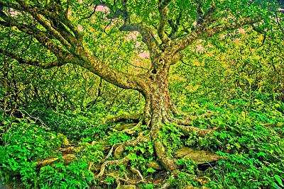 Photograph - The Tree by Allen Nice-Webb
