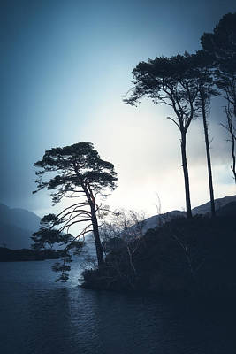 Photograph - The Trees Of Loch Eilt by Philippe Sainte-Laudy
