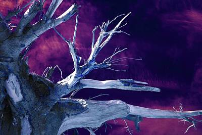 Surrealism Royalty Free Images - The Upturned Tree in Infrared  Royalty-Free Image by Neil R Finlay