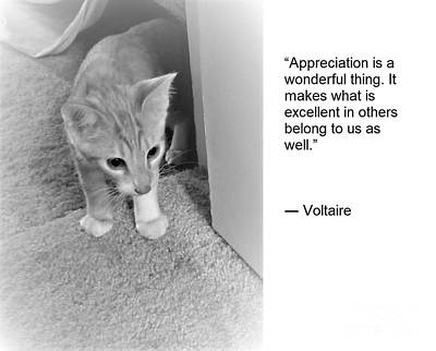 Old Masters - The Wisdom of Cats - Appreciation is a Wonderful Thing by Rose Elaine