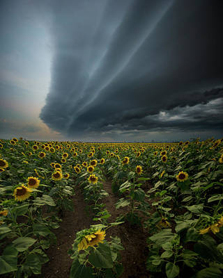 Mellow Yellow - They Dont Know by Aaron J Groen