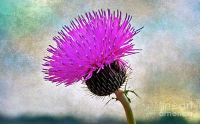 Kids Cartoons - Thistle Season by Gary Richards