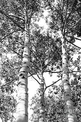 Whimsically Poetic Photographs Rights Managed Images - Three Aspens Royalty-Free Image by Roselynne Broussard