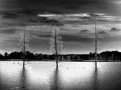 Photograph - Three Dead Cedar Trees by Louis Dallara