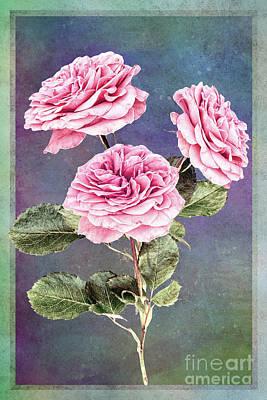 Digital Art - Three Roses by Mary Machare