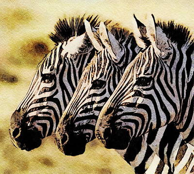 Painting - Three Zebras by Russ Harris
