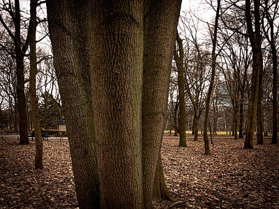 Photograph - ThreeTrees huddled together by Sean Patrick Durham
