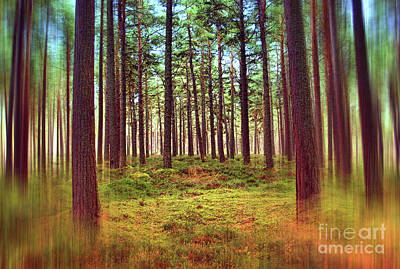 Photograph - Through the Pines 12 by Dave Harnetty
