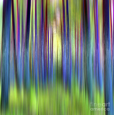 Photograph - Through the Pines 22 by Dave Harnetty