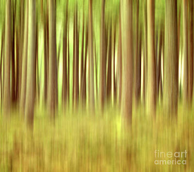Photograph - Through the Pines 7 by Dave Harnetty