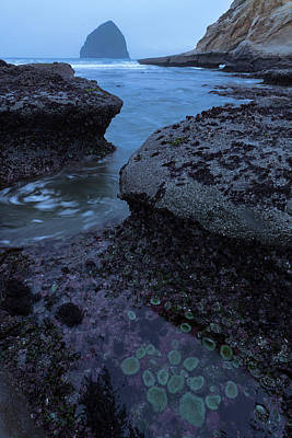 Photograph - Tide Pool Flow by Mike Berenson