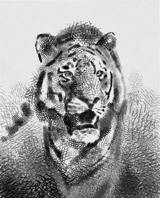 Animals Digital Art - Tiger Drawing Vintage by Bekim M
