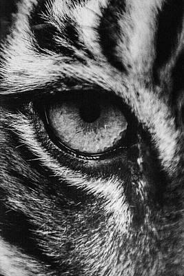 Grimm Fairy Tales - Tiger Eye by Sheri Bartoszek