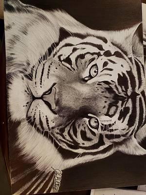 Animals Drawings - Tiger by John Balestrino