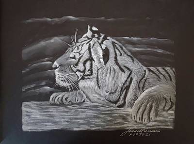 Animals Drawings - Tiger sun bathing by Joan Mansson