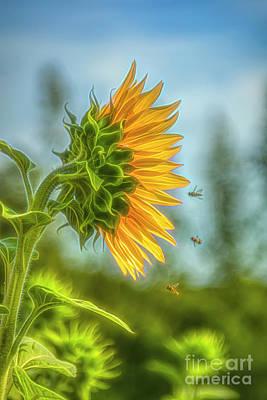 Staff Picks Cortney Herron - Time of sunflowers by Veikko Suikkanen