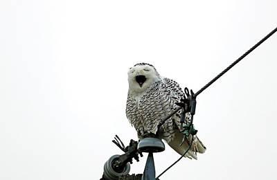 Traditional Bells - Tired Snowy Owl by Debbie Oppermann