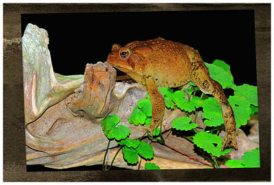 Uncle Sam Posters - Toad On Driftwood by Constance Lowery