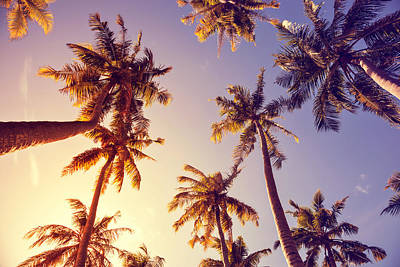 Royalty-Free and Rights-Managed Images - toning vintage under palm trees against a blue sky with clouds in the Caribbean Maldivian Hawaii. Palm trees at tropical coast, vintage toned and film stylized. Palm trees a over bright sky background by Julien