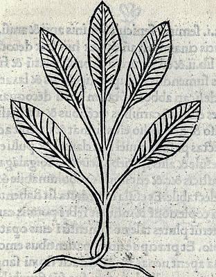 Winter Animals Rights Managed Images - Tractatus de virtutibus herbarum 1499 by Arnaldus de Villanova 1311 9 Royalty-Free Image by Artistic Rifki