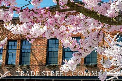 Jerry Sodorff Royalty-Free and Rights-Managed Images - Trade Street Cherry Trees by Jerry Sodorff