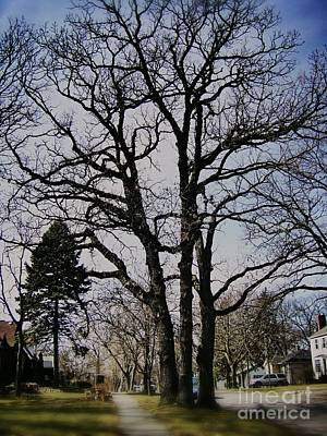 Frank J Casella Royalty-Free and Rights-Managed Images - Tree Branches Stretch Into the Sky by Frank J Casella