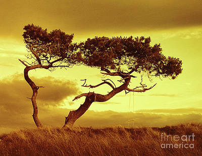 Photograph - Tree Dance  by Dave Harnetty