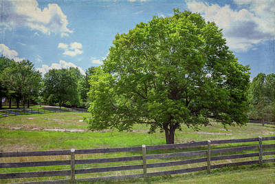World War 2 Action Photography Royalty Free Images - Tree in a Summer Pasture Royalty-Free Image by David Beard