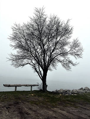 Photograph - Tree in fog by Gregory Steele