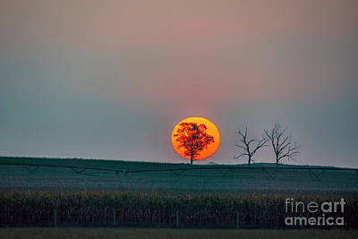 Billiard Balls - Tree in Silhouette and Sun Rising by David Arment