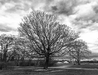 Photograph - Tree Landscape in Berlin by Sean Patrick Durham