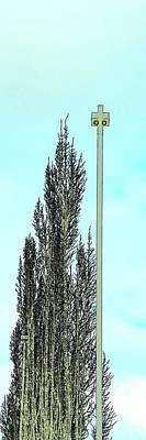 Jerry Sodorff Royalty-Free and Rights-Managed Images - Tree Light Pole Blue Sky by Jerry Sodorff