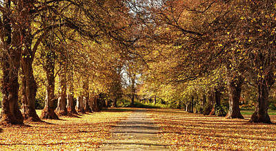 Wilderness Camping - Tree Lined Avenue at Maynooth University - Ireland by Barry O Carroll