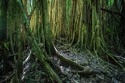Photograph - Tree of Costa Rica by Emmanuel Rondeau