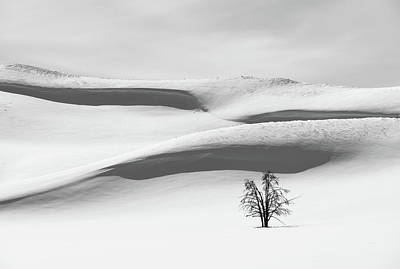 All You Need Is Love - Tree on Snow by Alex Lapidus