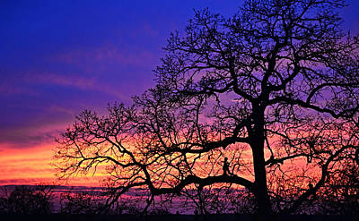 Lady Bug - Tree Sunset Silhouette and Fairy Girl by Gaby Ethington