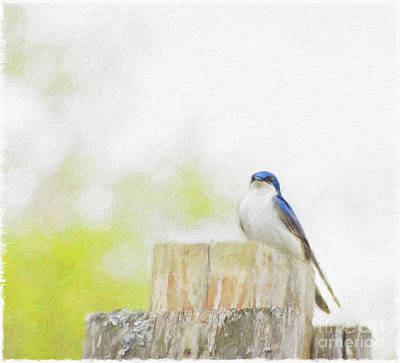 Animals Paintings - Tree Swallow by Kathleen Rinker