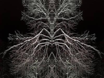 Caravaggio - Tree Symmetry in Coffee Colour by John Williams