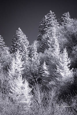 Dan Beauvais Royalty Free Images - Treeline 1107 Royalty-Free Image by Dan Beauvais