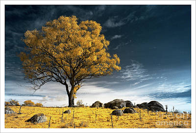 Photograph - Trees and Rocks 2 by Russell Brown