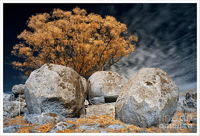 Photograph - Trees and Rocks 3 by Russell Brown